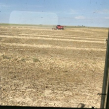 Combining Pinto Bean Fields
