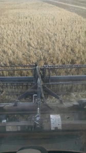 Combining Pinto Beans