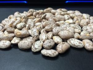 Rocky Mountain Region Beans