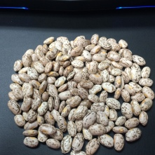 Rocky Mountain Region Pinto Beans