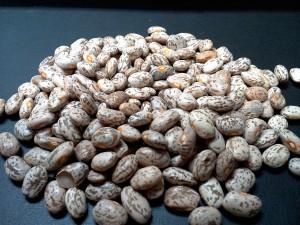 2014 Pinto Beans Alberta