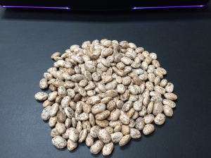 New Crop Pinto Beans