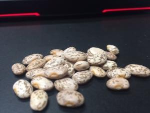 Kansas Pinto Beans
